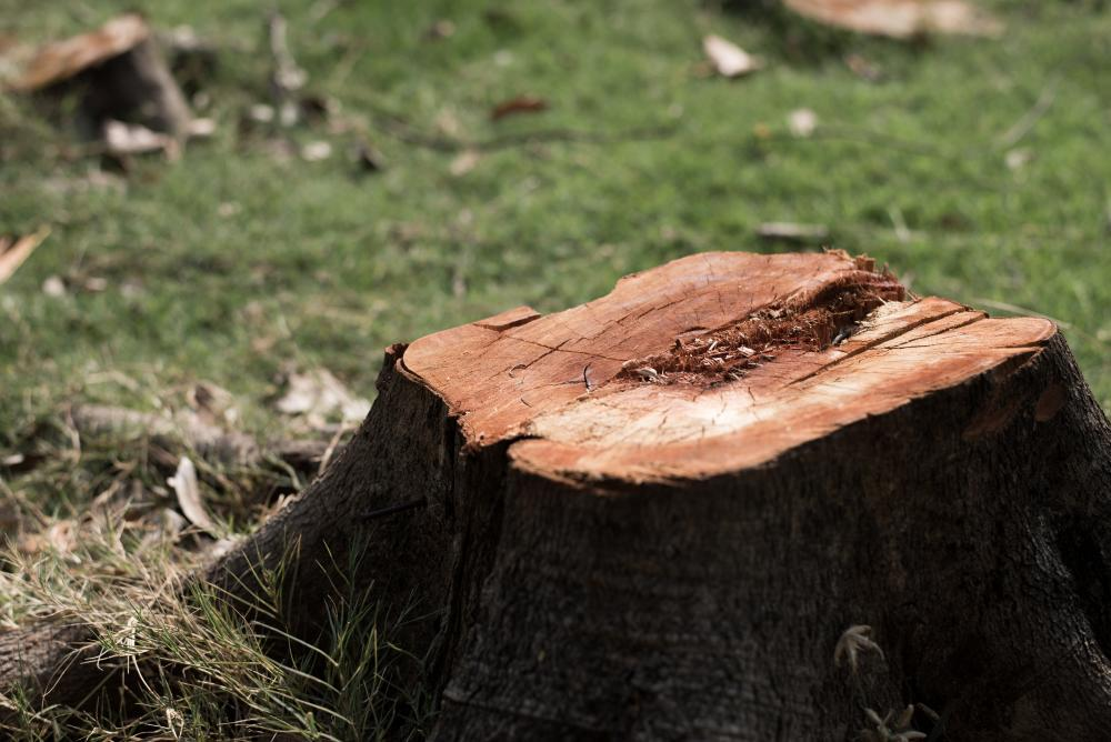 stump-removal-can-be-found-in-adelaide